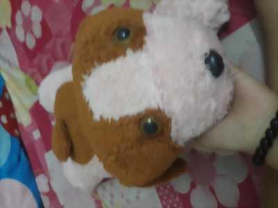 Bé Chó Gấu Bông