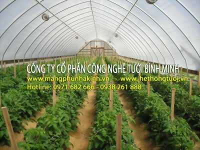 Màng phủ nhà kính Politiv, nhà kính trồng rau, nhà kính trồng hoa, nhà kính phơi nông sản, nhà kính phơi gạch