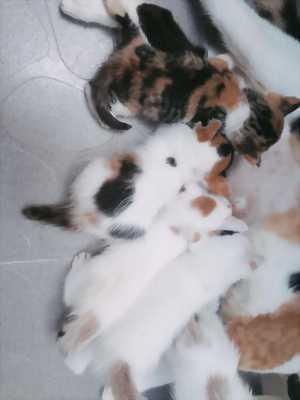 Tìm nhà mới cho các bé mèo ALN lai