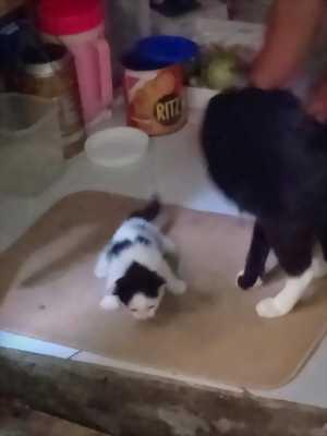 Cần tìm chủ cho bé mèo