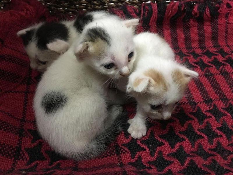 Tặng mèo con 2 tuần tuổi