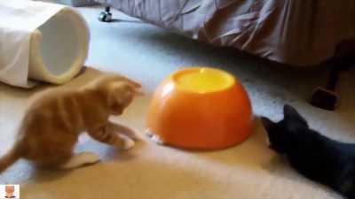 Mèo con tìm chủ tại Đồng Tháp