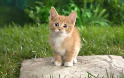 Bán Mèo Con tại Đồng Tháp