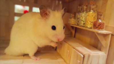 1 em hamster baby giá 30.000VND nha