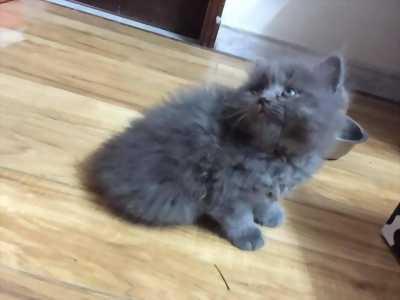 Mèo Ald 34