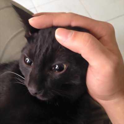 Mèo Anh