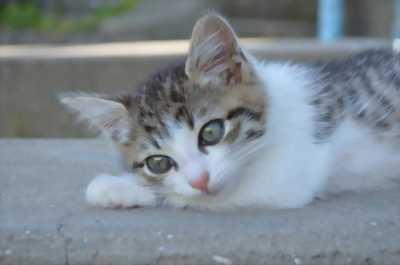 Mình cần mua bé mèo như hình