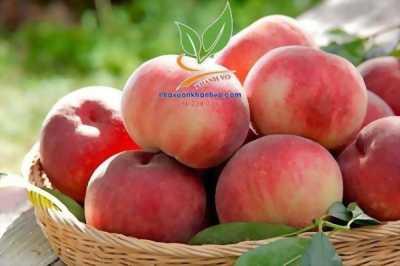 Đào tiên Nhật Bản trồng được ở xứ nóng - trái to - sai trĩu