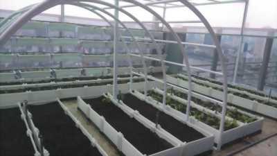 Sân thượng để làm vườn rau với chậu ghép nhựa thông minh