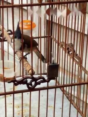 Bán chim Bình Định 2 mùa