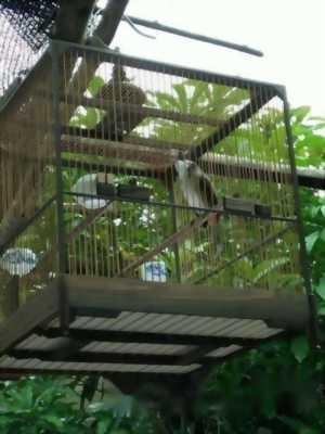 Lồng đổi chim
