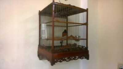 chim glưu