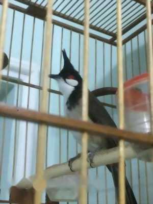 Bán chim 3 mùa