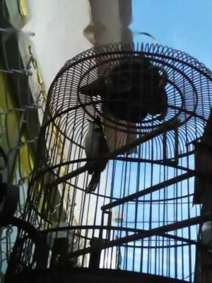 Bán chim 5 mùa