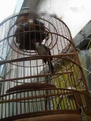 Cần bán chim