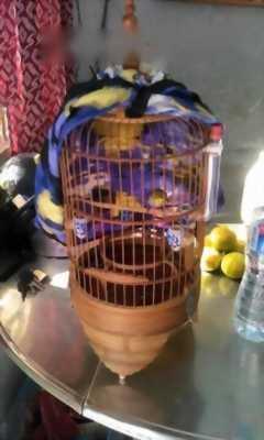 Cần bán lồng và chim