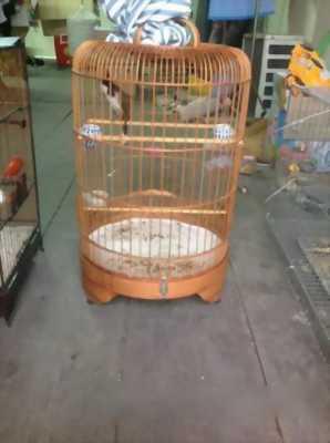 Bán chim Gia Lai