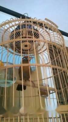 Bán chim như ảnh 2 mùa