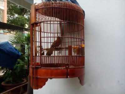 Muốn bán chim và lồng