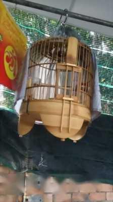 Cần bán chim như hình