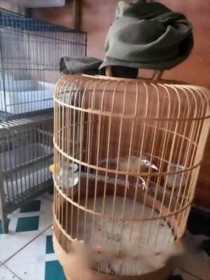 Mình cần bán chim Hoạ Mi