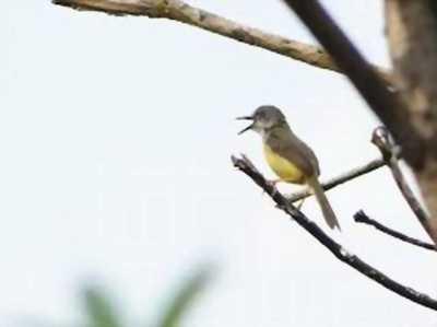 Bán một em sâu xanh do đang cần lồng để nuôi chim khác
