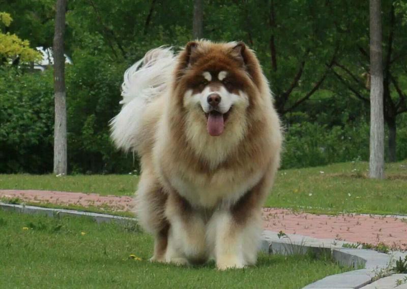Tiêu chuẩn để sở hữu được chú thú cưng Alaska