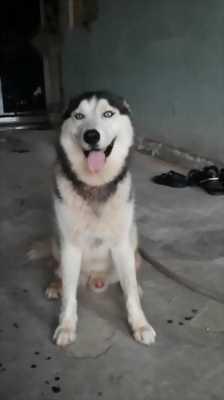 alaska 16 tháng tuổi
