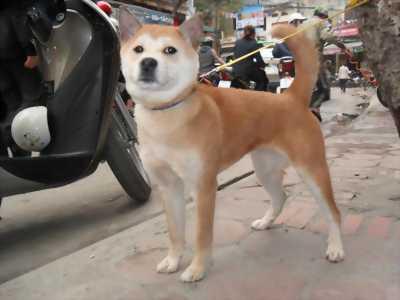 Mình muốn bán chó con nặng 4kg giá 250 nghìn đồng