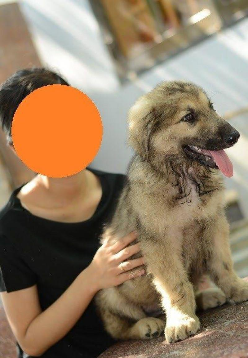 Tìm chủ mới cho bé chó becgie nga