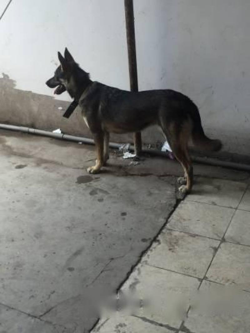 Cần tìm chủ cho chó