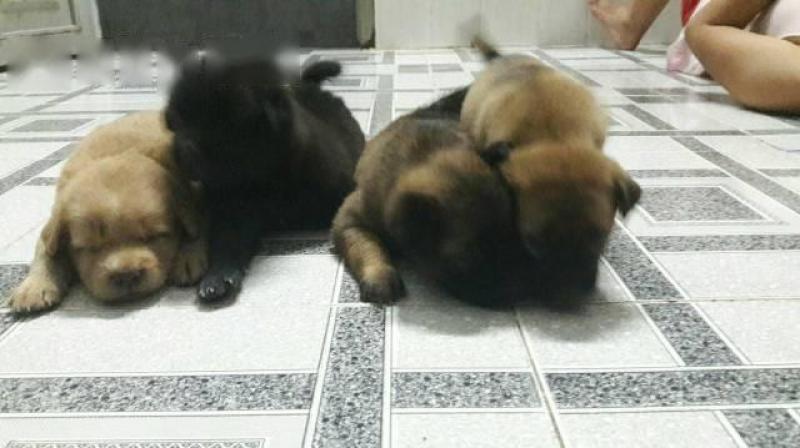 4 em cún