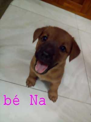 Cún con siêu dễ thương