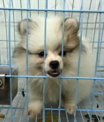 Mình muốn mua bán chó cảnh từ Thái Lan về Việt Nam giá bèo.
