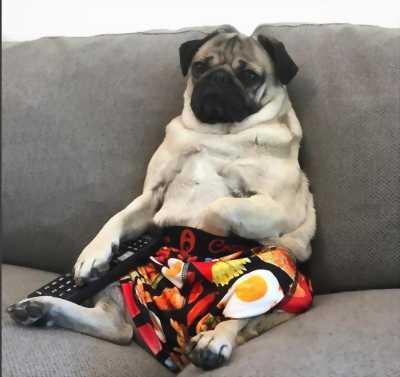 Bán chó mặt xệ thuần chủng