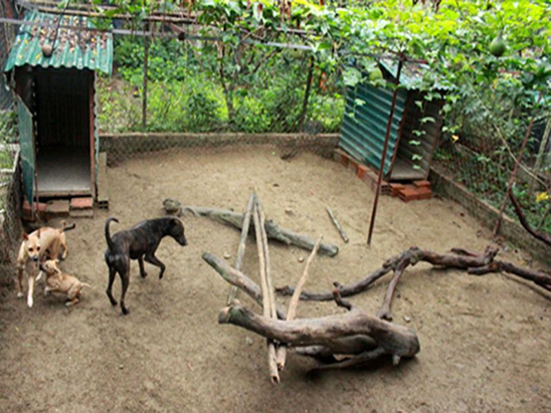 Câu chuyện của chủ Trại chó Phú Quốc tại Hà Nội uy tín nhất