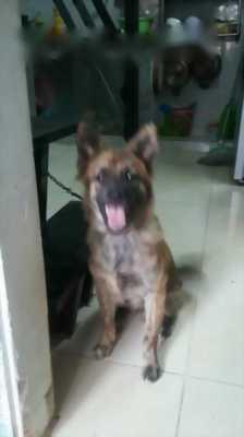 Chó bốn tháng tuổi