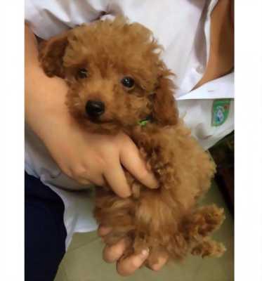 Cần bán em chó con dễ thương với giá rẻ