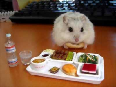 Luna Hamster  (mua sắm không lo về giá !,up liên tục)