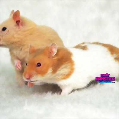 2 bé hamster bear