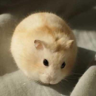 Bé hamster đây cả làng oie 🤩🤩