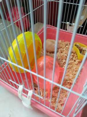 Chuột hamster và lồng