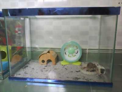 Thanh lý tất cả hamster , chuồng sắt , lồng kiếng mới 99% giá rẻ