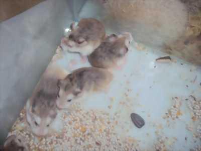 Bán Hamster và nhím (Tina pet shop)