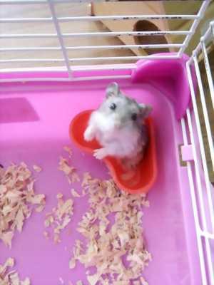Hamster con