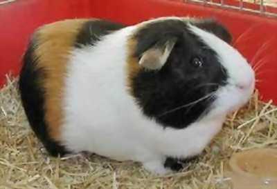 K PETMART -cửa hàng thú cưng - chuyên mua bán hamster, thỏ, bọ ,sóc...
