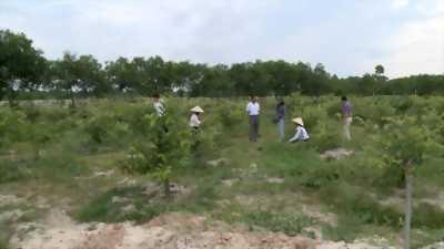 Bán 2.2 mẫu đất rẫy, có trồng cây lâu năm