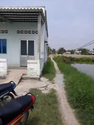 Cần bán gấp đất lúa cách mặt tiền đường xe tải 100m ở Ấp 5, xã Tân Ân, huyện Cần Đước, tỉnh Long An.