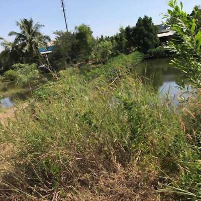 Đất mặt tiền đường. gần phà Bình Khánh, Cần Giờ, Tp.HCM