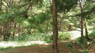 Đất thổ cư mặt tiền đường Rừng Sác, Bình Khánh, Cần Giờ